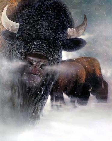 buffalo-painting